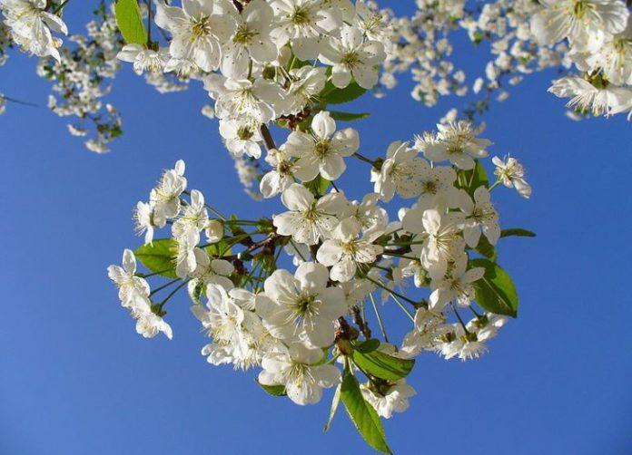 Пролет. Снимка: Общомедия