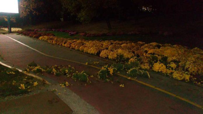 Цветята. Снимка: л.арх Емил Манолов, Забелязано в София, Фейсбук